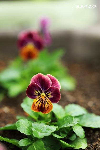 gardening_4700.JPG