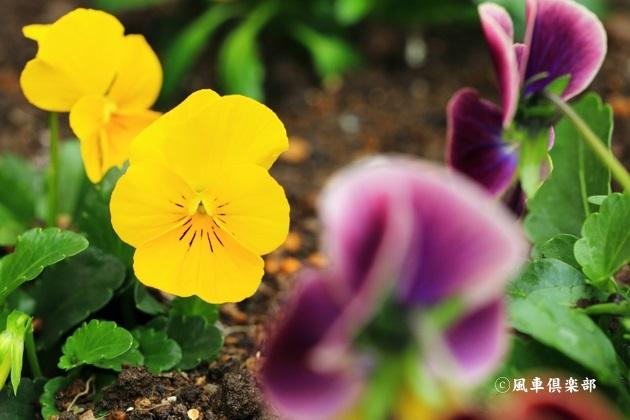 gardening_4702.JPG