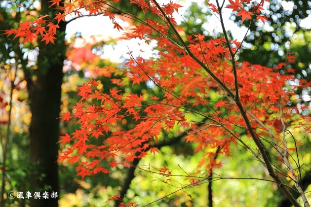 gardening_4706.JPG