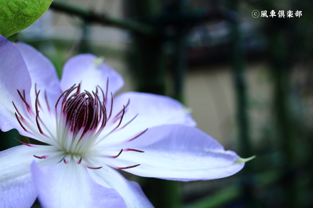 gardening_4710.JPG