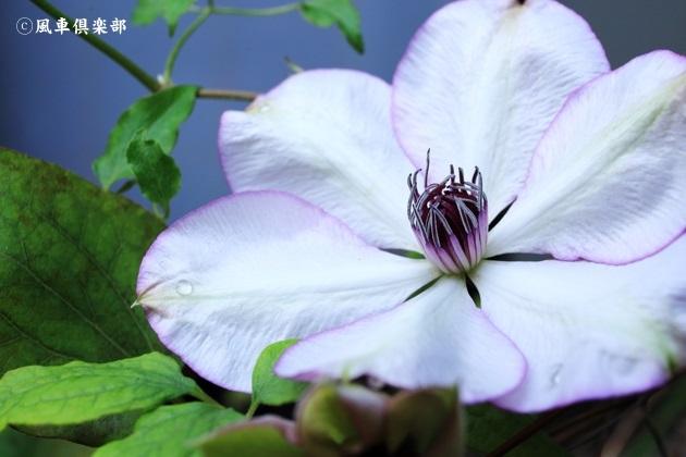 gardening_4712.JPG