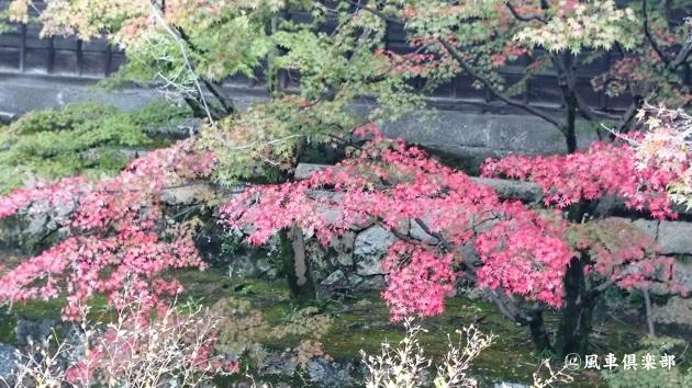 gardening_4715.jpg