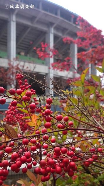 gardening_4719.jpg