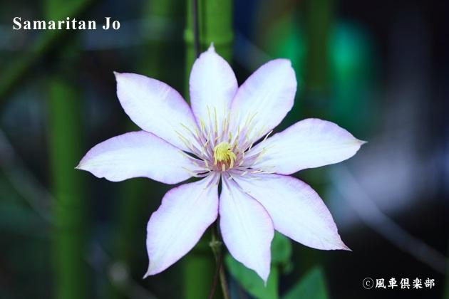 gardening_4734.JPG