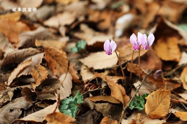 gardening_4735.JPG