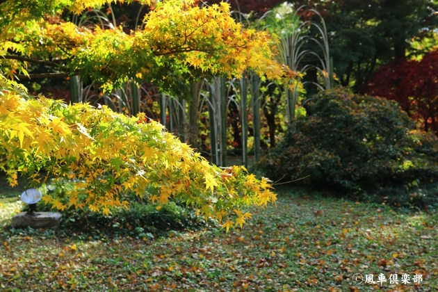 gardening_4739.JPG