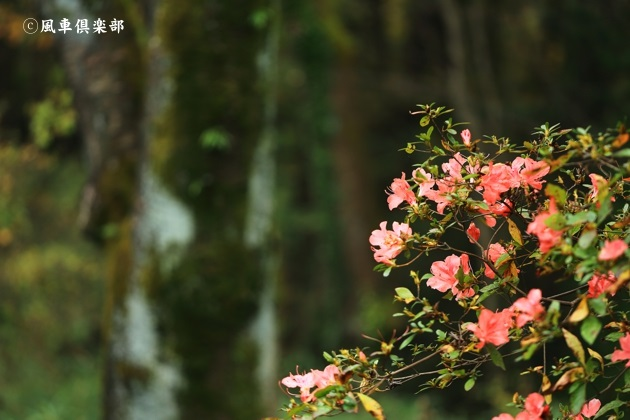 gardening_4763.JPG