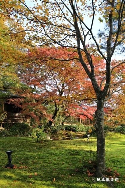 gardening_4805.JPG