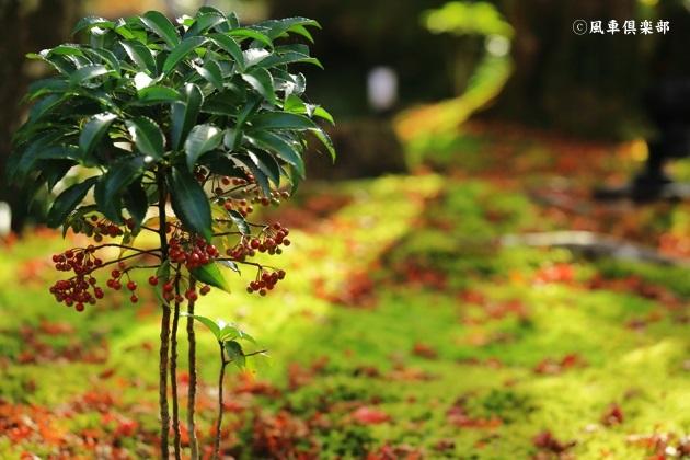 gardening_4806.JPG
