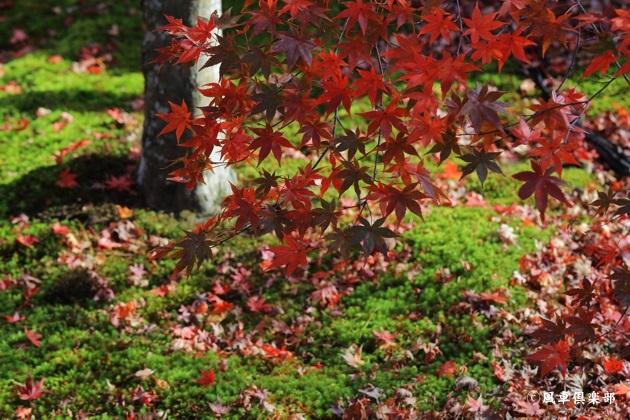 gardening_4808.JPG