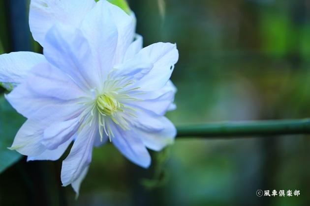gardening_4854.JPG