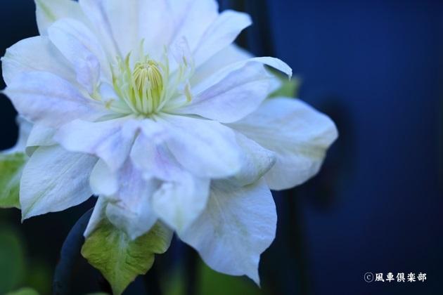 gardening_4855.JPG