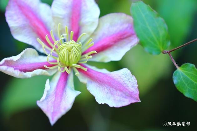 gardening_4857.JPG