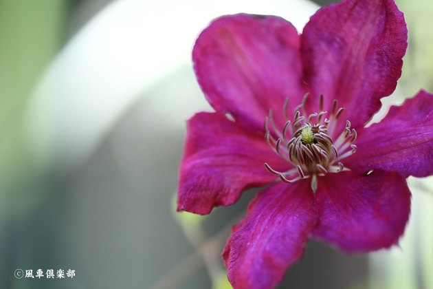 gardening_4858.JPG