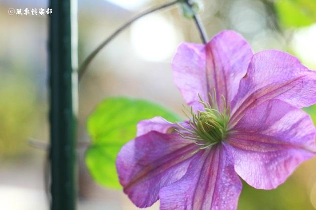 gardening_4862.JPG