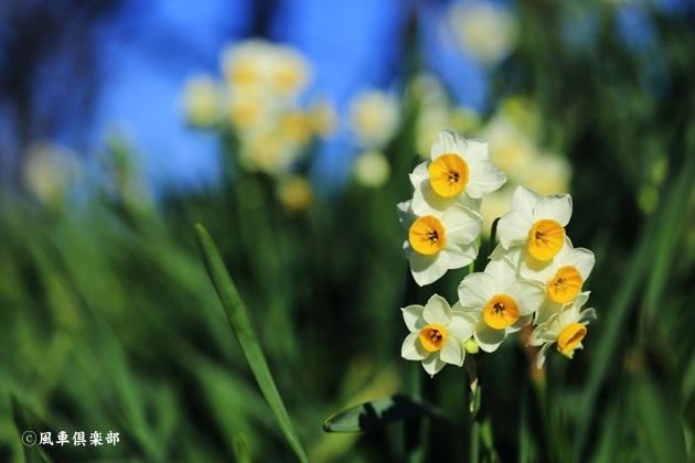 gardening_4869.JPG