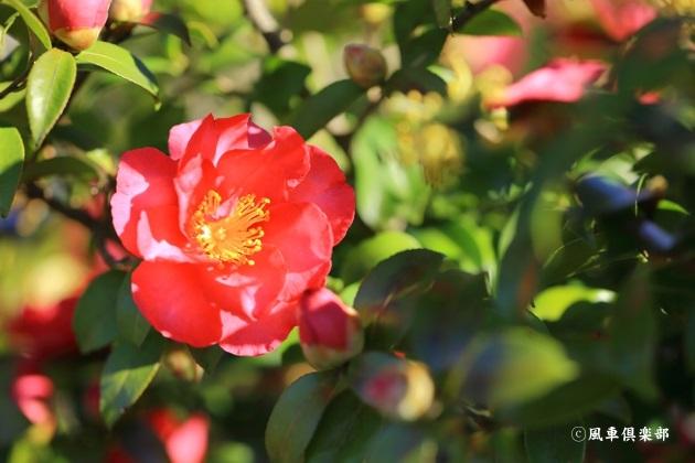 gardening_4872.JPG