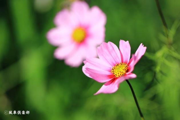 gardening_4873.JPG