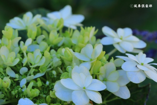 gardening_4874.JPG