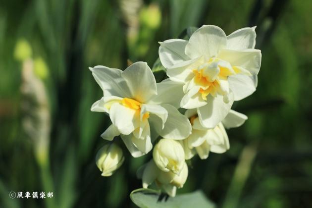 gardening_4878.JPG