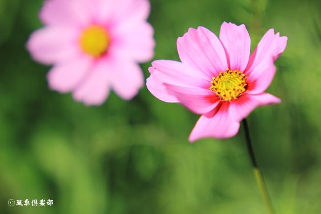 gardening_4879.JPG