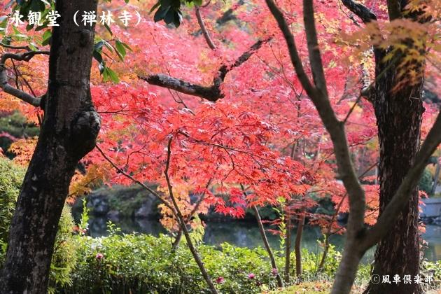 kyoto_111913.jpg