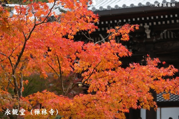 kyoto_111916.jpg