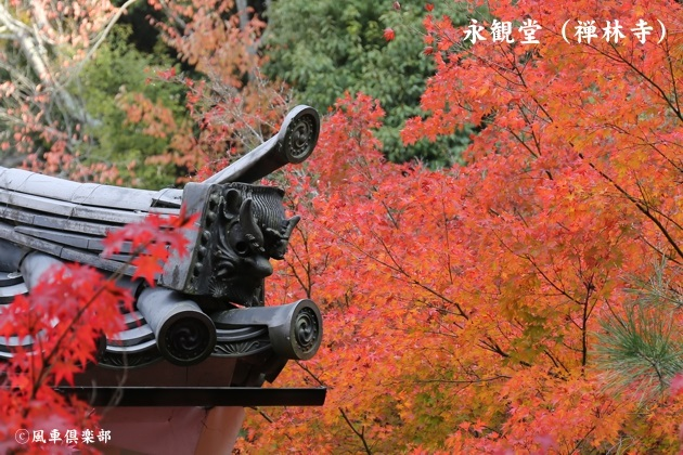 kyoto_111917.jpg