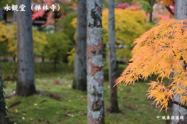 kyoto_111918.jpg