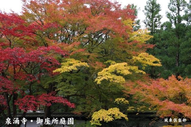 kyoto_111922.jpg