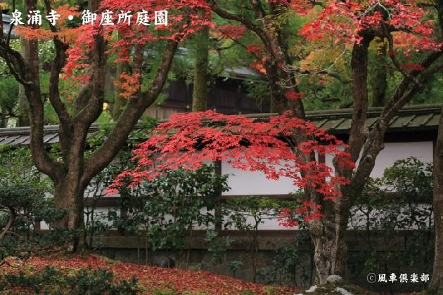 kyoto_111923.jpg