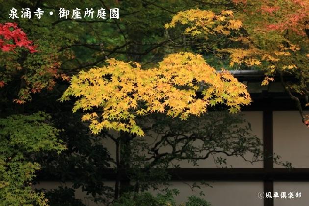 kyoto_111924.jpg