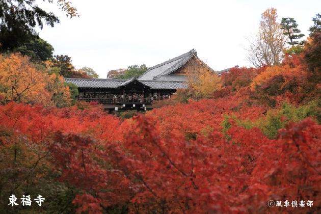 kyoto_111927.jpg