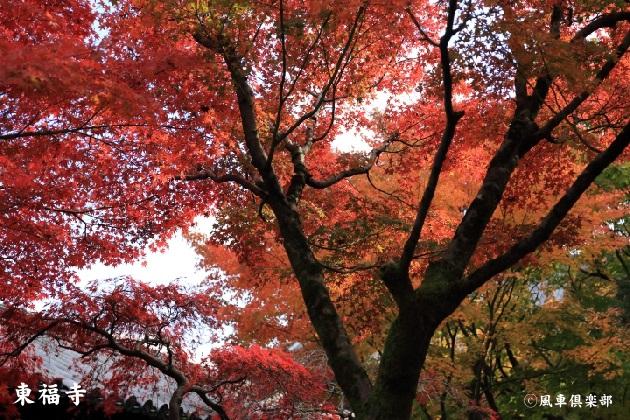 kyoto_111928.jpg