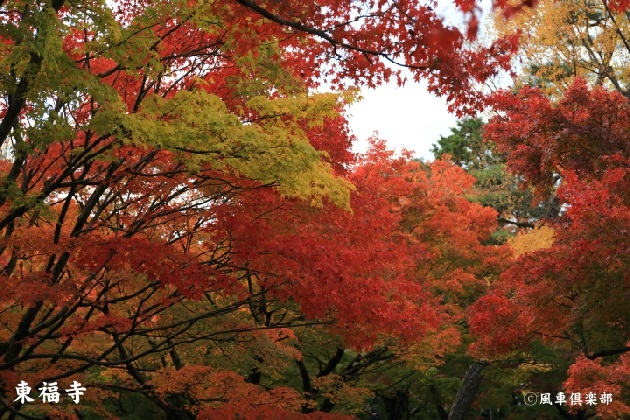 kyoto_111929.jpg