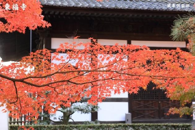 kyoto_111930.jpg