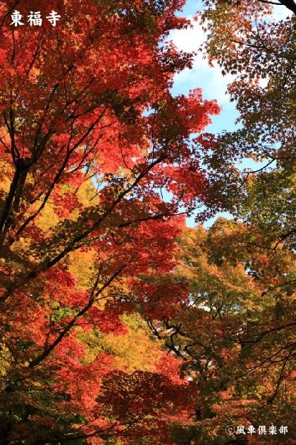 kyoto_111931.jpg