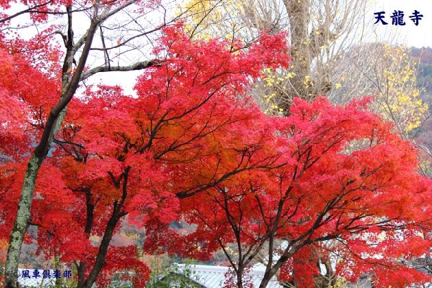 kyoto_111934.jpg