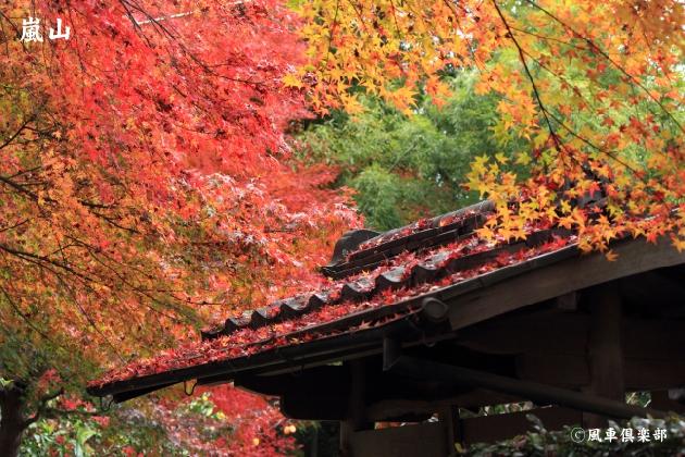kyoto_111939.jpg