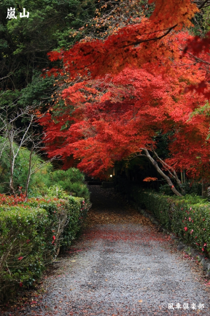 kyoto_111940.jpg
