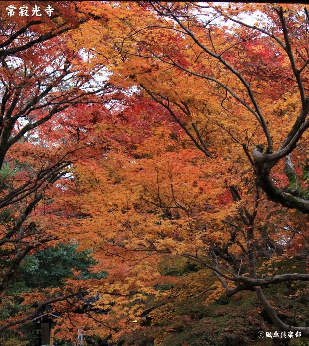 kyoto_111941.jpg