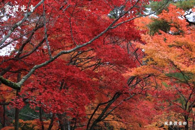 kyoto_111944.jpg