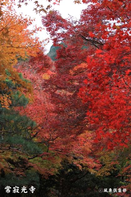 kyoto_111946.jpg