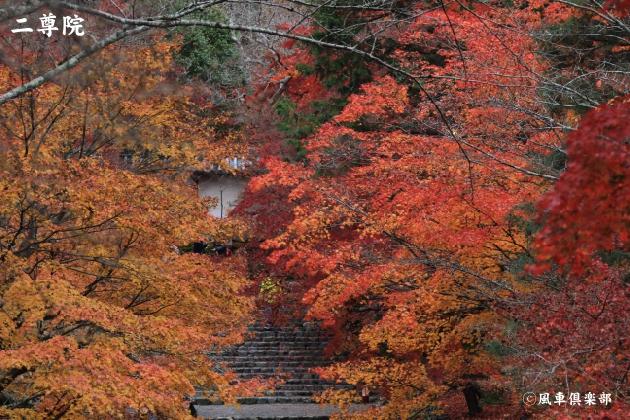 kyoto_111947.jpg