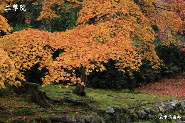 kyoto_111948.jpg