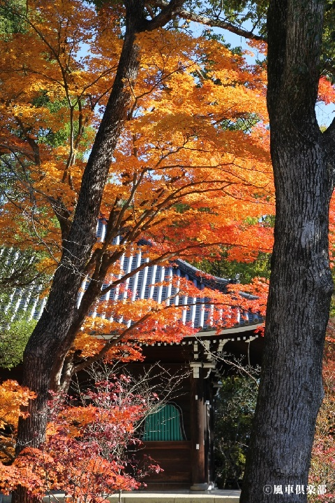 kyoto_1129305.JPG